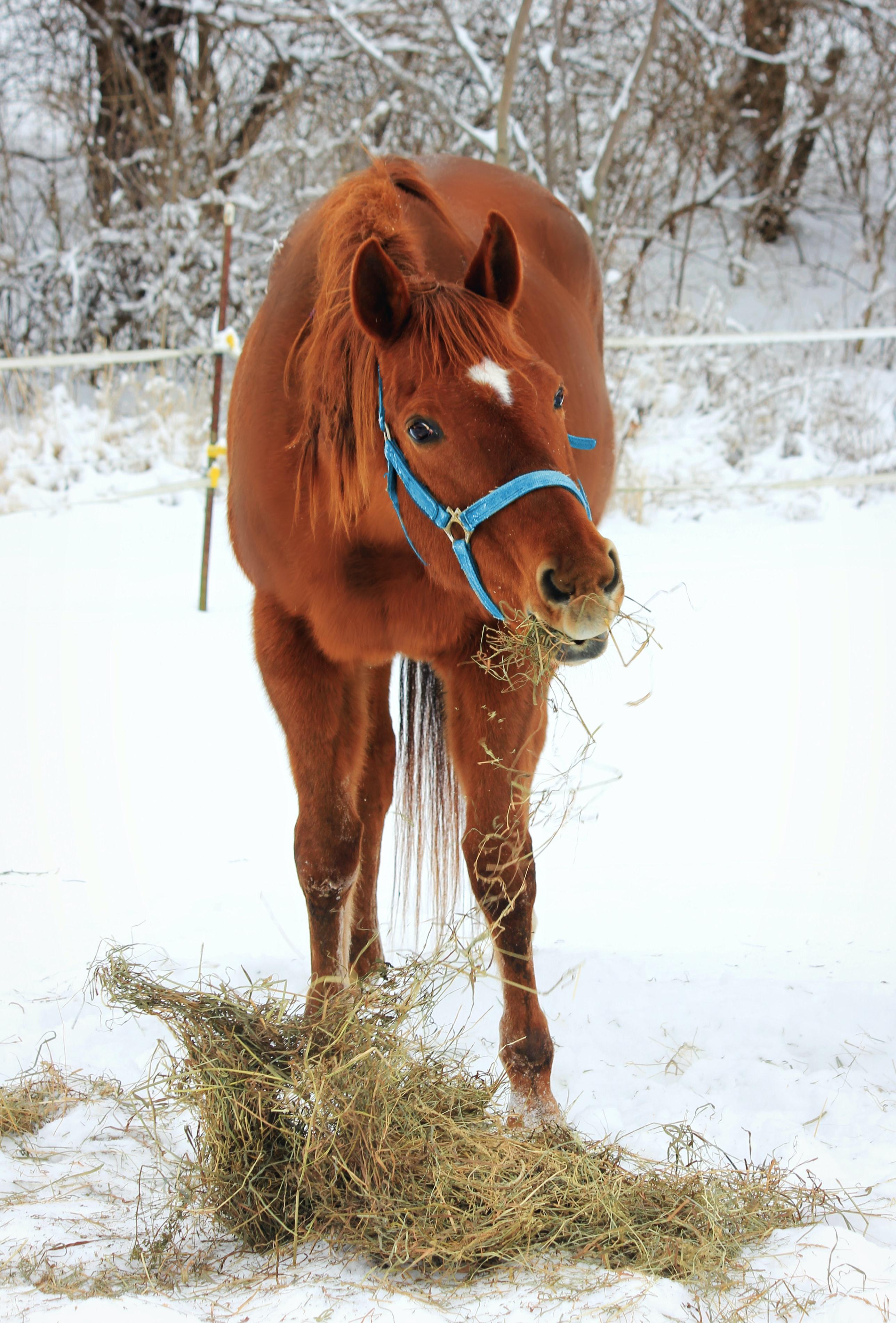 Paard met hooi